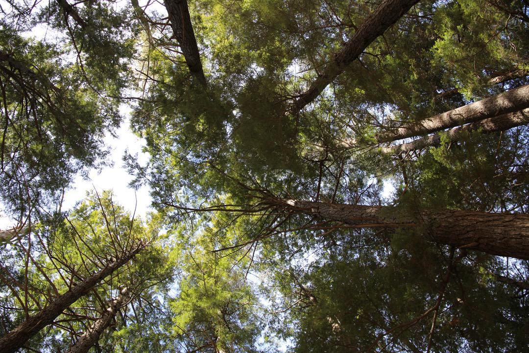 Tree Surfing